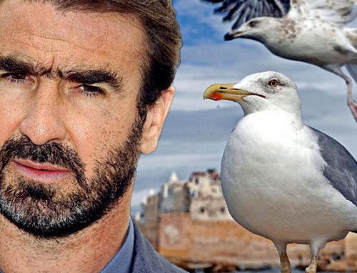 Eric Cantona la clavó con las gaviotas
